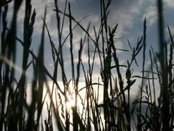 Durchs Gras geschaut (II)