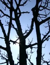 Erleuchteter Apfelbaum