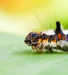 Ich wär so gern ein farbenprächtiger Schmetterling