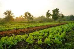 Landscape of organic vegetables cultivation farm