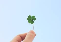 hand holding clover leaf on blue sky