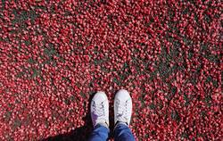 Selfie of feet in fashion sneakers on red flower