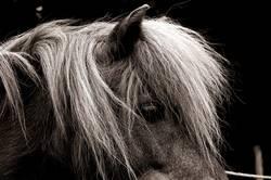horse/profil