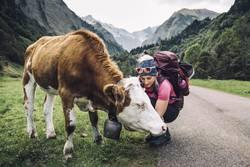 Junge Frau beim Wandern mit Kuh