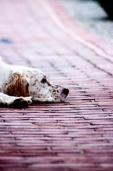 flatly dog