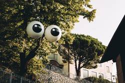 The tree is watching you