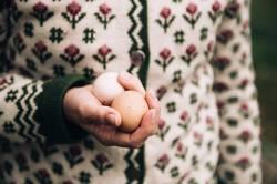 frisch gelegte Eier