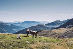 Pferde in den südtiroler Alpen