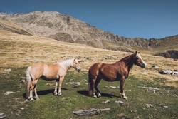Pferde auf dem Südtiroler Hirzer | E5 Alpenüberquerung