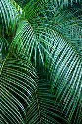 Graphics and Textures - Tropical feeling - Palm Leaf