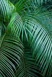 Grafiken und Texturen - Tropisches Gefühl - Palm Leaf