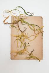 Herbarium - Blätter auf Papier