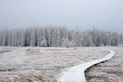 Weg in den Winterwunderwald