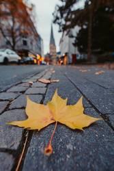 Gelbes Herbstblattt auf der Strasse zeigt zum Bonner Münster
