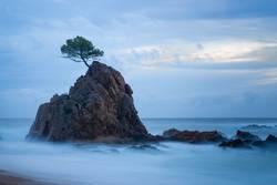 Langzeitbelichtung von Baum auf einem Felsen im Meer