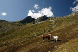 Vorarlberg und nicht Island