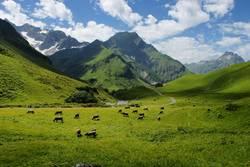 Viehweide im Gebirge