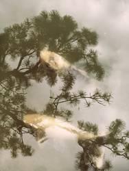Emotion | Traum-Fisch mit Libelle