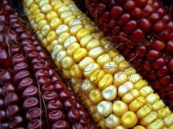 I'm corny