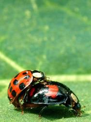 Käfer machen