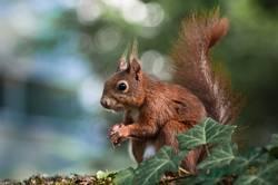 pose 4 nuts