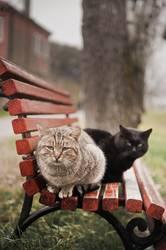 Black and orange stray cat sittin' on a bench - Vol.1