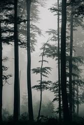 Nachdemregenwald [8]