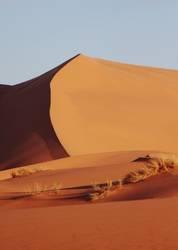 Busch und Sand