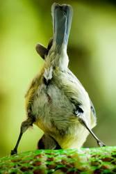 Kiss my shiny birdy Ass
