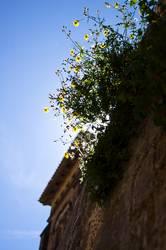 Frühlingserwachen_südländisch