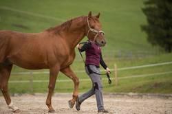 Junge Frau mit Pferde auf der Pferdekoppel im Freien