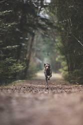 Hund läuft im Wald auf Weg
