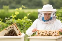 Junger Imker kontrolliert Bienenstock in der Ausbildung