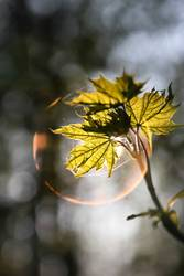 Light bubble