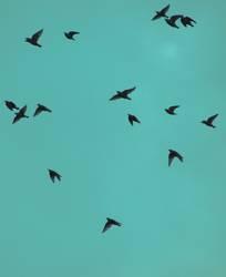 Herbstvögel II