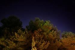 Waldbeleuchtung
