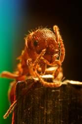 Ameise entdeckt die Welt