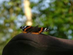 Schmetterling auf dem Rad...