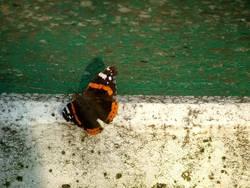 Schmetterling beim Sport...