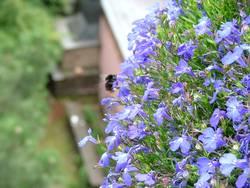 Bienenfütterung