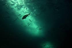 undersea again