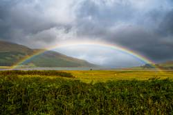 Regenbogen mit Schafen auf der Isle of Skye in Schottland