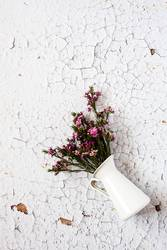 Flowers on white background. Flat lay