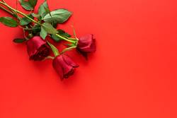 red roses with red background