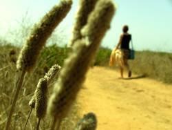 Ein Andalusischer Spaziergang