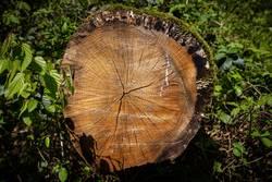 Jahresringe - Wald - Holz - Baumstamm