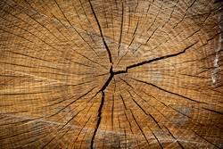Baumstamm - Jahresringe - Holz - Struktur -