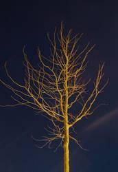 Naked tree at night