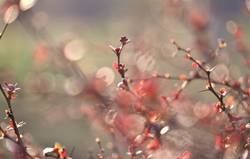 leichte Frühlingsbrise...