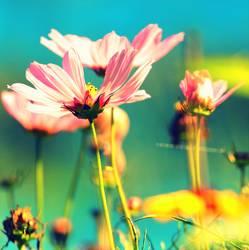Florasoft I